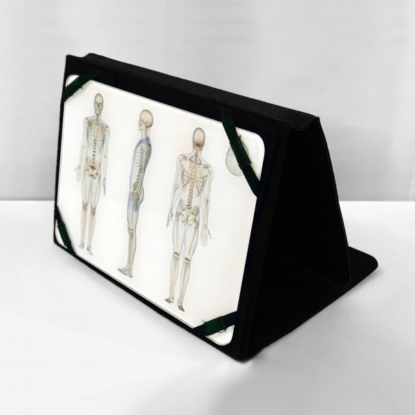 OsteoBoard Desk-On