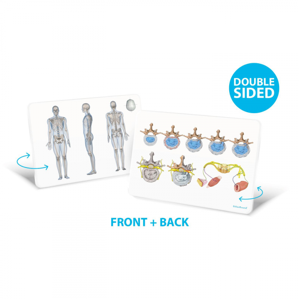 OsteoBoard Handy - Front-Back