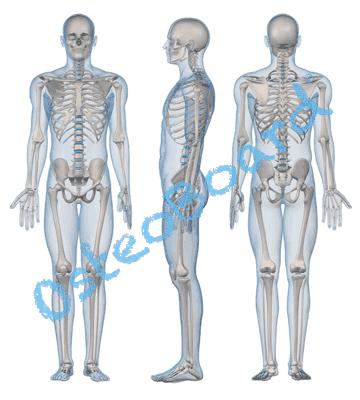 osteoboard-design