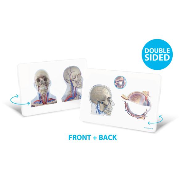 OsteoBoard Cranium